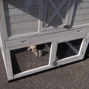 Kaninchenstall mit tiefer Schublade