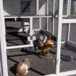 Hühnerstall Kathedral XL mit grossem Auslauf