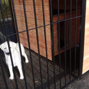 Geëignet für mittelgrosse Hunde