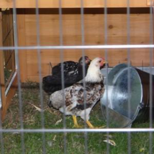 Hühnerstall Holiday Large mit zusätzlichem Auslauf 438