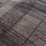 Kaninchenauslauf Maik | Freilaufgehege | Schwarz pulverbeschichtet