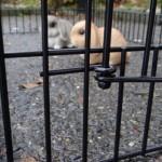 Kaninchenstall Marianne mit Nageschutz mit freilaufgehege Joey