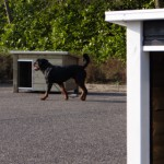 Schöne Hundehütte JoyPet.eu
