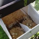 Legenest hühnerstall