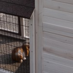 Kaninchenstall mit Auslauf