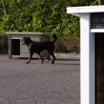Hundehütte mit Flachdach