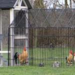 Hühnerstall Twin mit legenest und auslauf Louis