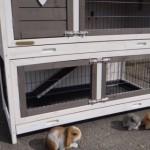 Preiswerter Kaninchenstall Adrian