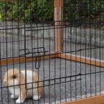Kaninchen-Freilaufgehege Multirun Redbrown mit Nagerschutz