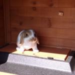 Kaninchenstall Excellent Medium redbrown mit Nageschutz und Isolierset