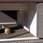 Kaninchenstall Annemieke XL mit Auslauf