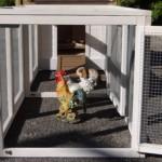 Hühnerstall Ambiance Small mit 2 Auslaufmodulen