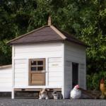 Hühnerstall ohne anbau-auslauf