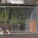 Hundezwinger FLINQ mit Dach