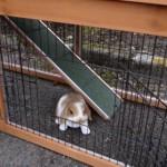 Türen Kaninchenstall Maurice