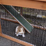 Unteren auslauf kaninchenstall maurice