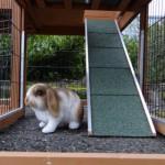 Laufplanke kaninchenstall