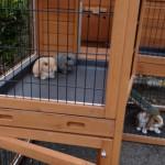 Kaninchenstlal Maurice mit schublade