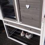 Hühnerstall mit praktischen Schublade