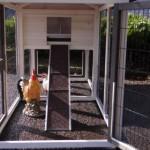 Rampe und Auslauf Hühnerstall