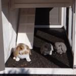 Unteren Auslauf Kaninchenstall Annemieke