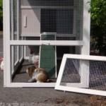 kaninchenstall mit Öffnung für anbau-auslauf
