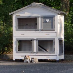 Kaninchenstall für zwergartigen Kaninchen