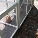 Kaninchenstall Julia mit anbau-auslauf