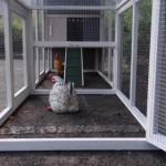 hühnerstall mit anbau-auslauf