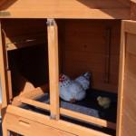 Hühner schlafteil mit sitzstang