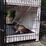 Kaninchenstall Adrian mit Auslaufmodulen Joey