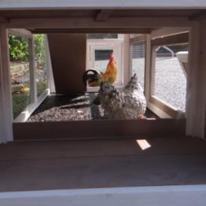 unteren auslauf hühnerstall