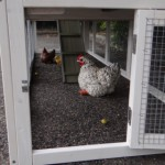 Hühnerstall mit große unteren Auslauf