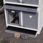 Kaninchenstall mit kunststof schublade