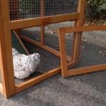 Extra Öffnung für anbau-auslauf kaninchenstall