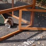 Öffnung für anbau-auslauf kaninchenstall