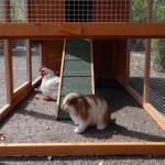 Unteren auslauf kaninchenstall Julia