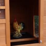 Schlafteil hühnerställe