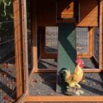 Auslauf Hühnerstall Prestige Medium