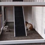 Unteren auslauf kaninchenstall Holiday
