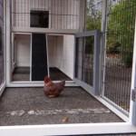 Hühnerstall Holiday Medium weiß - mit Große Auslauf