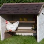 Hühner Schlafplatz im Hühner Heim