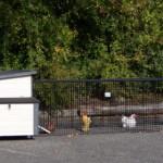 Hühnerstall Eva mit große Auslauf