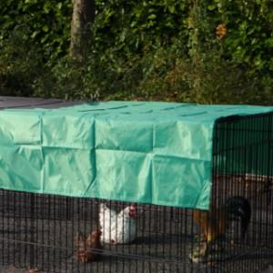 Sonnenschutz für Hühner auslauf