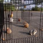 Auslauf für Kaninchen