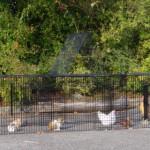 Auslauf für Hühner