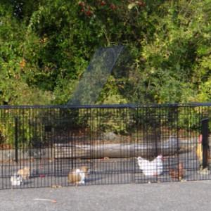 Hühner kaninchen auslauf Jeffrey