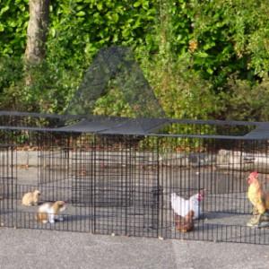 Hühner Auslauf Jeffrey
