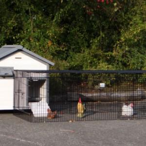 Hühnerstall Lotte mit Anbau-Auslauf Jeffrey