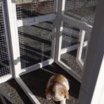 Kaninchenstall Leah mit nistkast